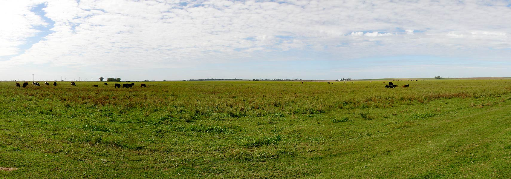 Grazing Land In Conhelo Department La Pampa Province Argentina Image Maximiliano Alba