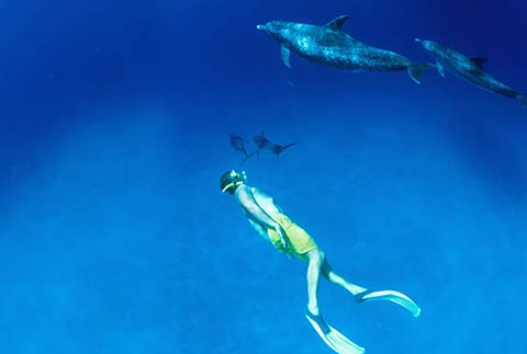 Bahamas - Diving with Dolphins