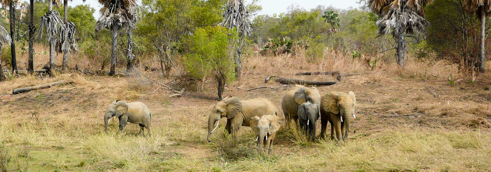 Elephants at Pendjari National Park in Benin