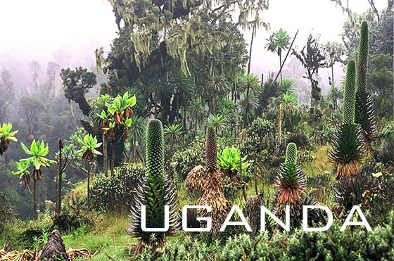 Rwenzori Mountains National Park, Uganda