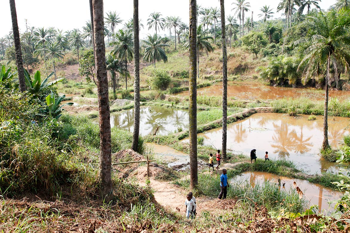 Community fish-farming ponds in the rural town of Masi Manimba