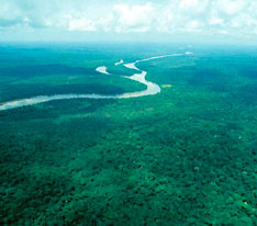 of the ituri rainforest