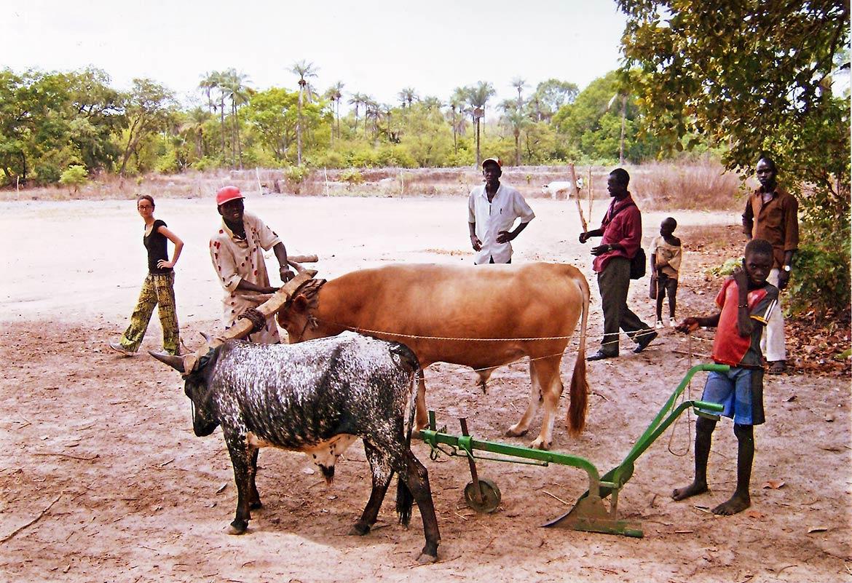 Agriculture in Guinea-Bissau
