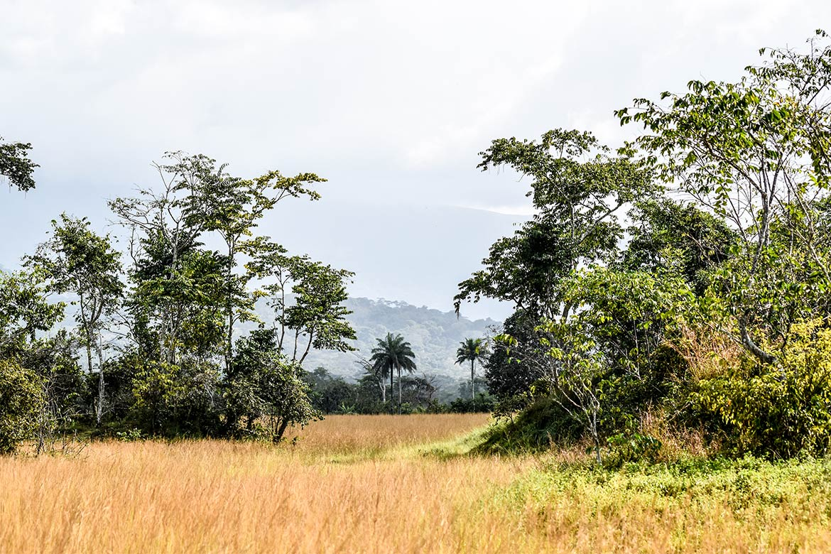 Savanna at Mount Nimba