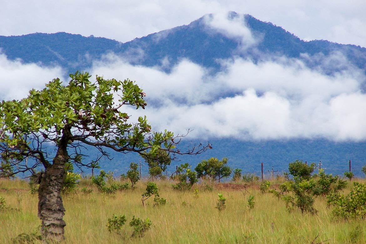 Kanuku Mountains near Lethem, Guyana