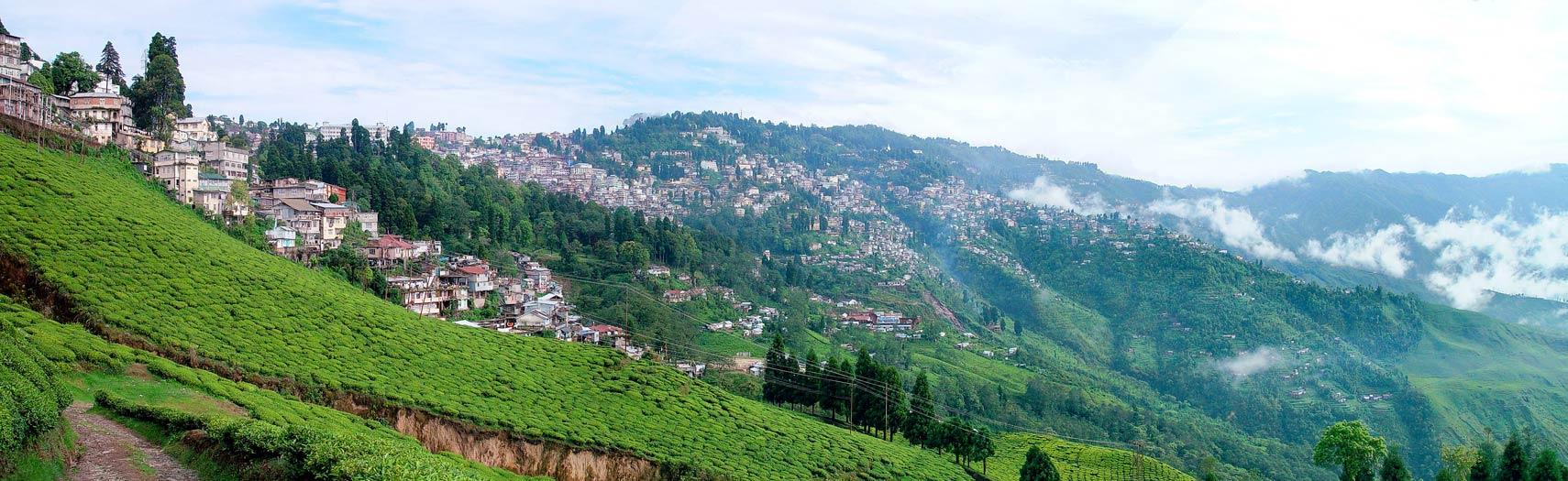 Happy Valley Tea Estate,  Darjeeling, West Bengal, India