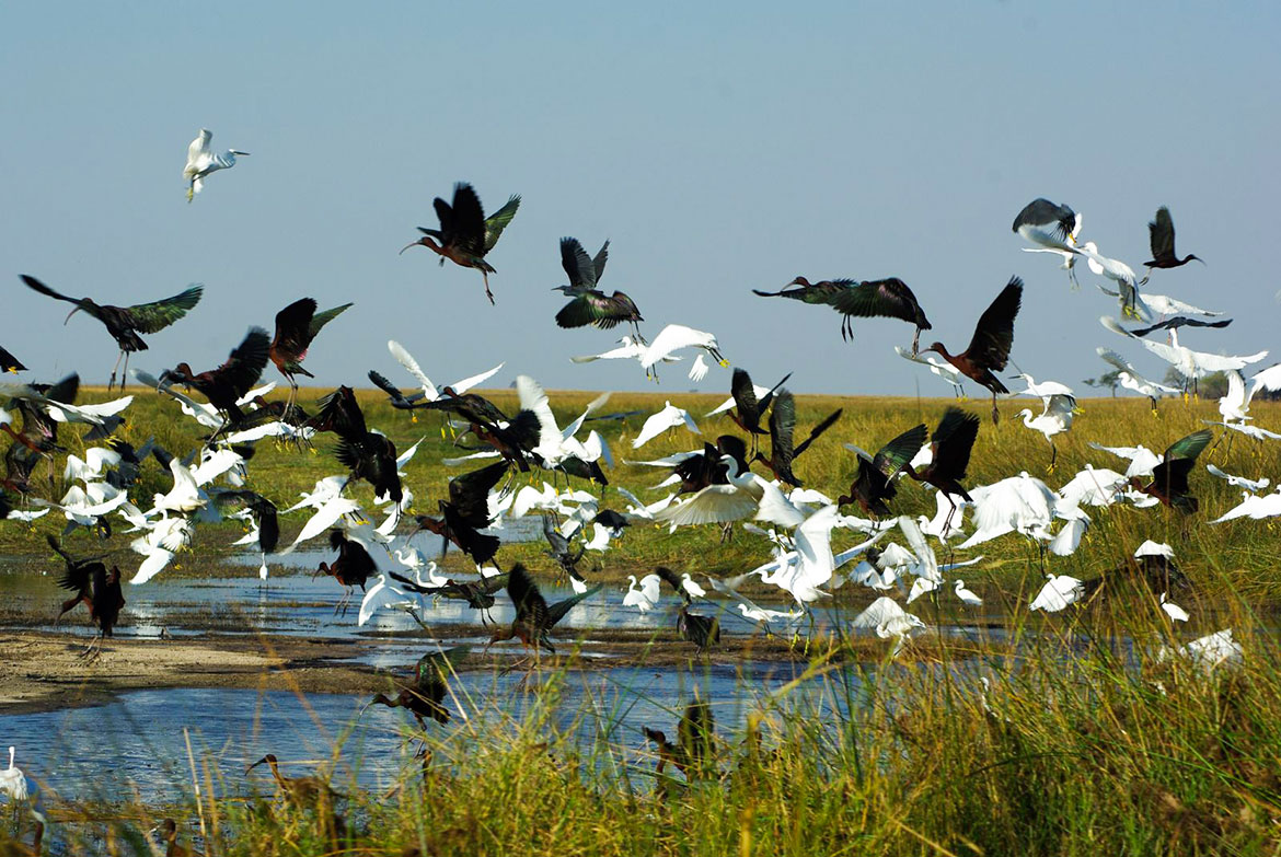 White and black Birds, Caprivi Strip, Namibia