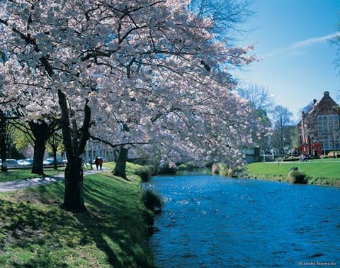 Christchurch - New Zealand