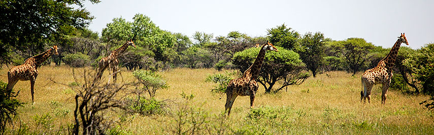 Polokwane Game Reserve, Limpopo province, South Africa