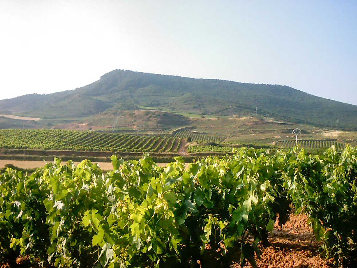 Spanish vineyards, Rioja wine, La Rioja