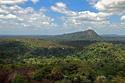 Amazon jungle with Mount Volzburg