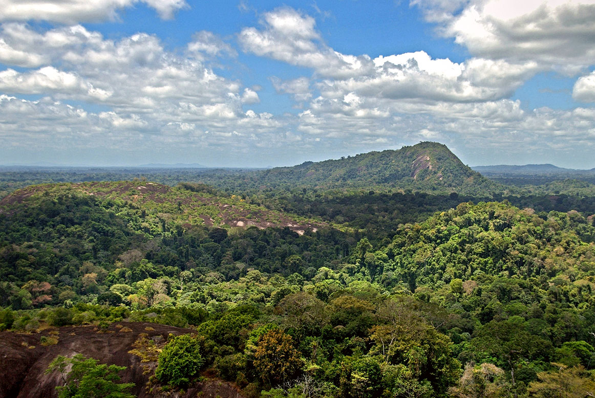 Amazon jungle with Mount Volzburg, Suriname