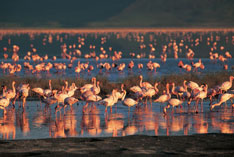 Flamingos in one of Tanzania's National Parks