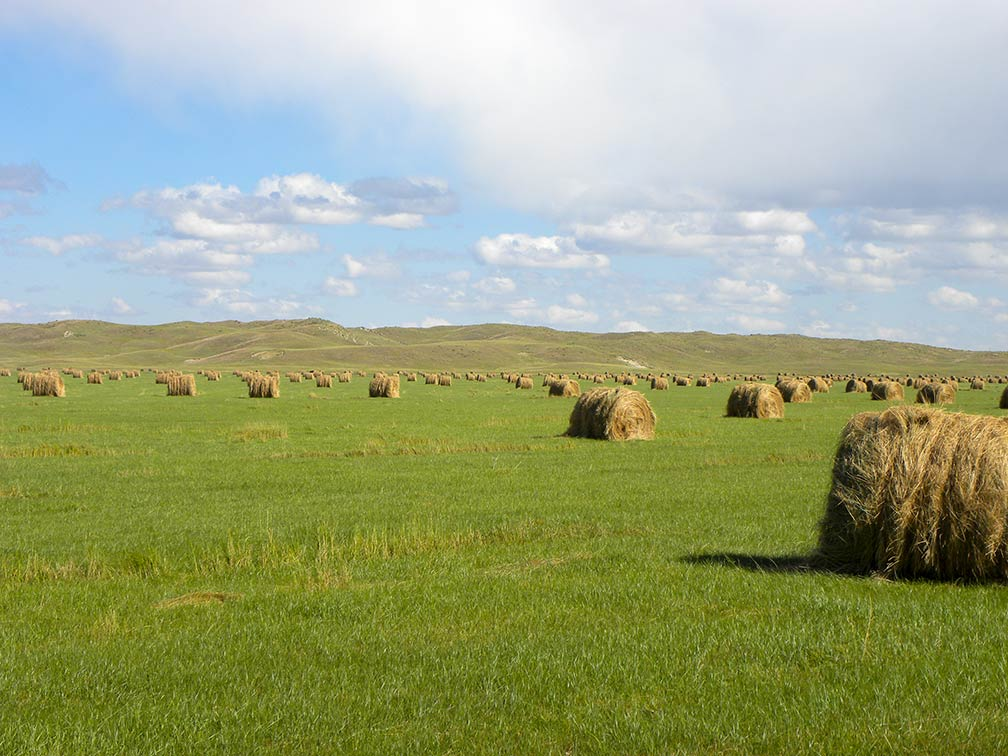 Rolled bales of hay west of Brownlee in the Sandhills of Nebraska