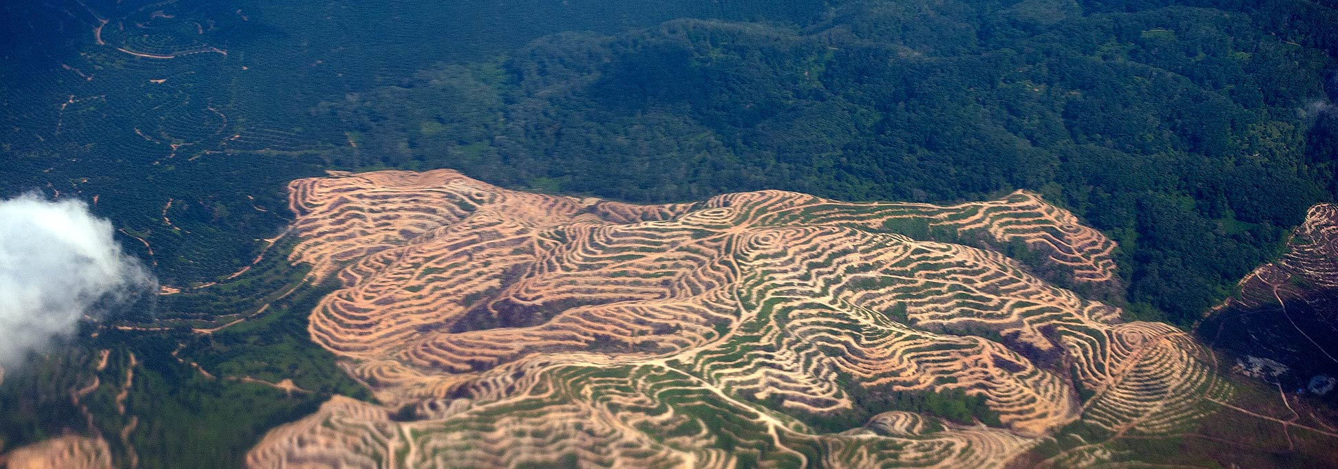 Terraced landscape in northern Malaysia