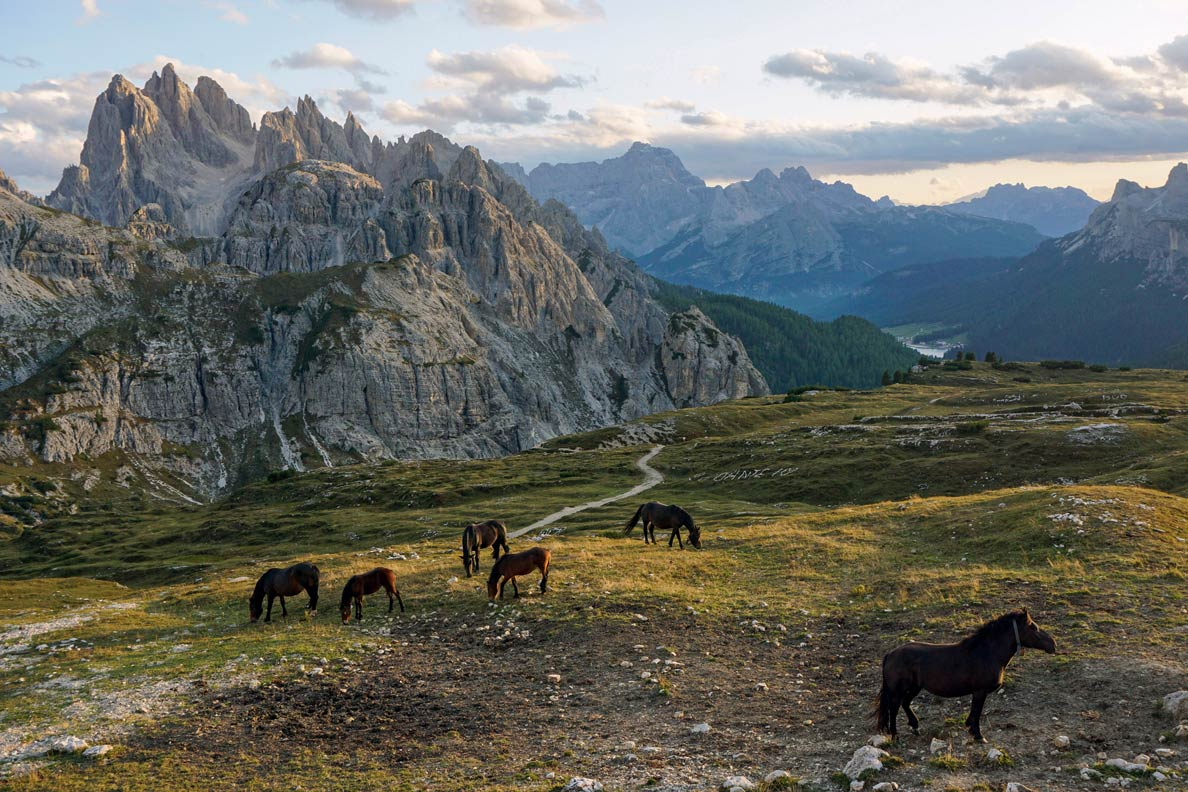 Horses on pasture at Parco Naturale Tre Cime (Sexten Dolomites), South Tyrol. Cadini di Misurina, a group of mountains in the eastern Dolomites